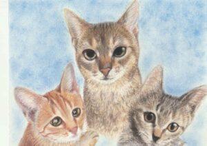cat×2